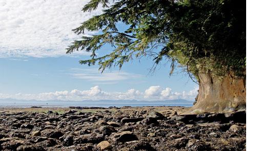 Vancouver Island-03