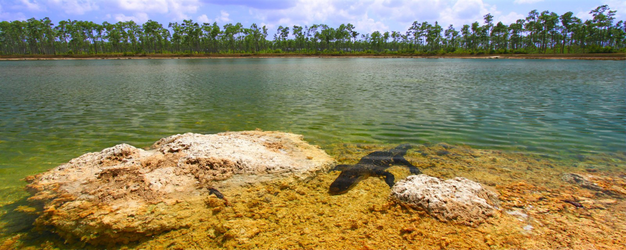Everglades-001