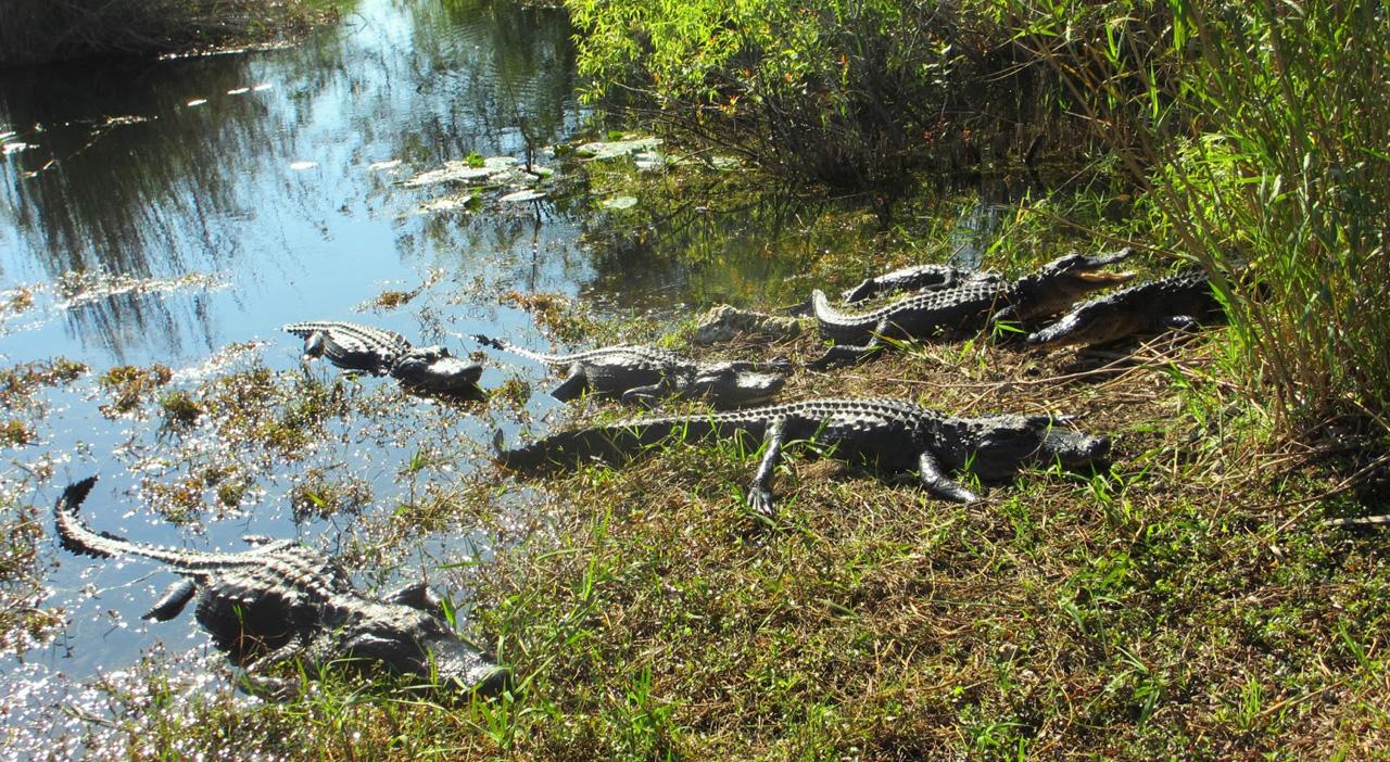 Everglades-110aac