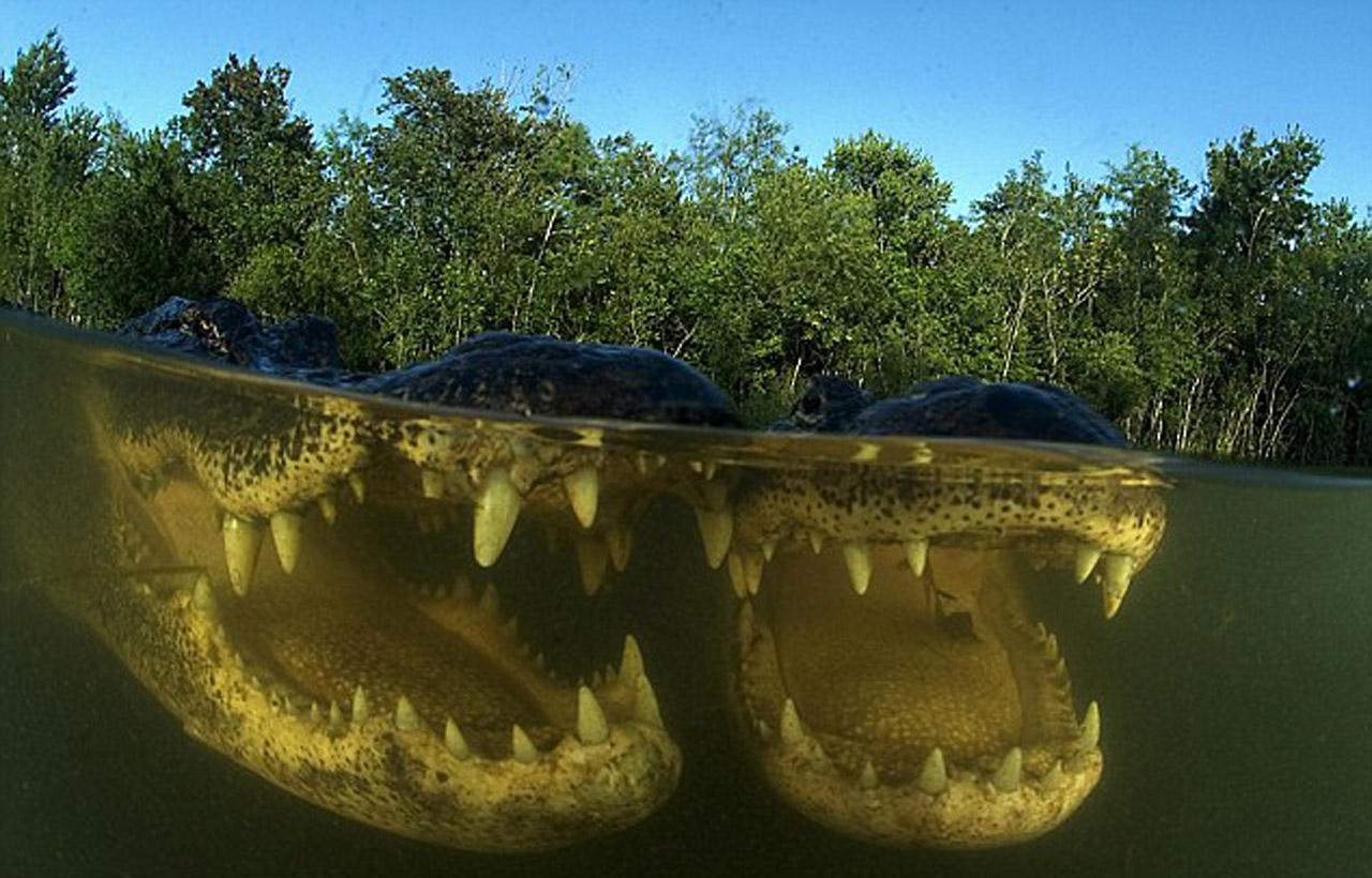 Everglades-110b