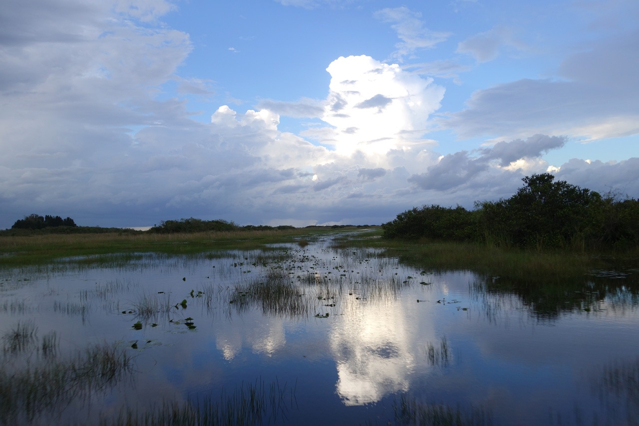 Everglades-13