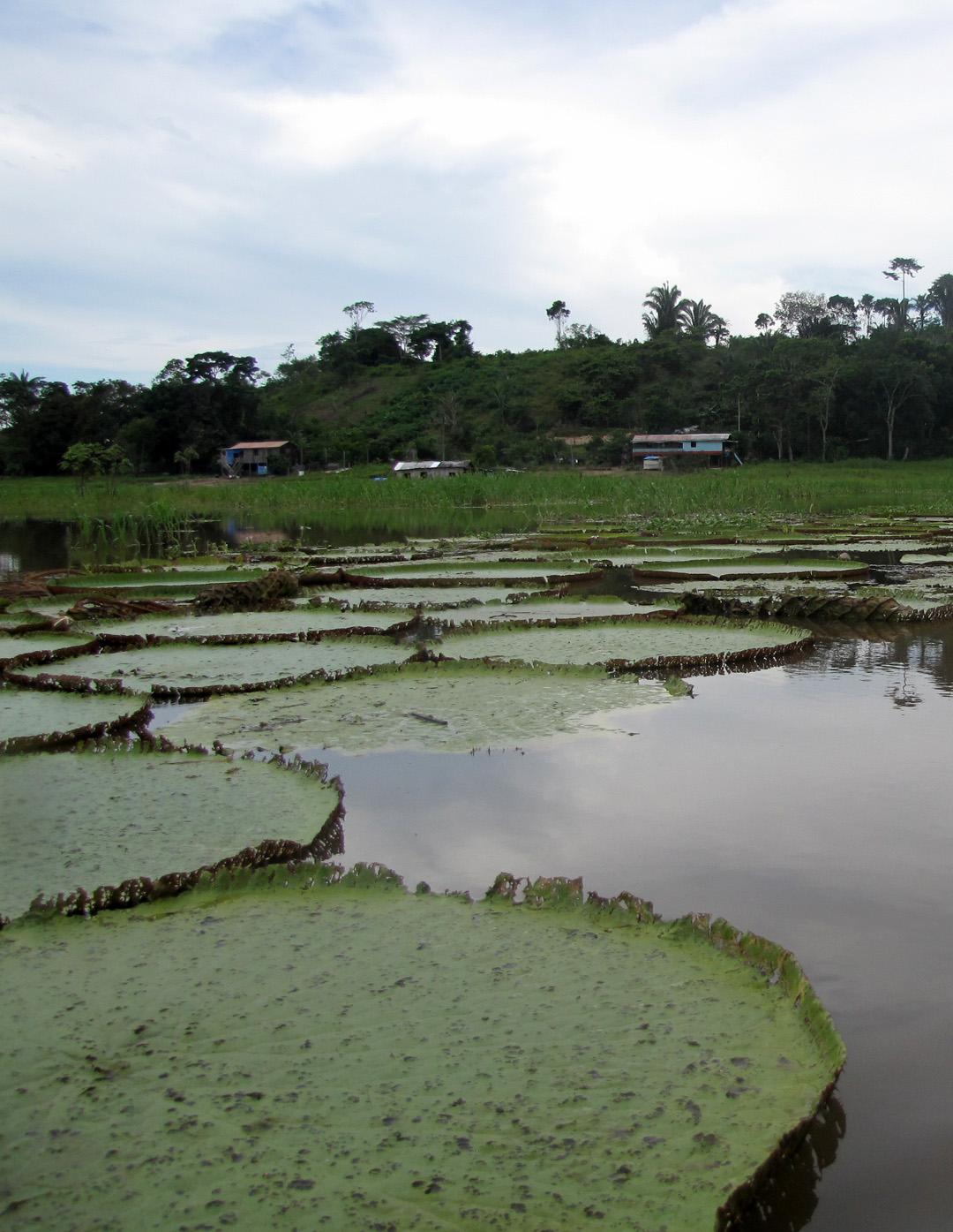 AMAZONIA-WEB-10a